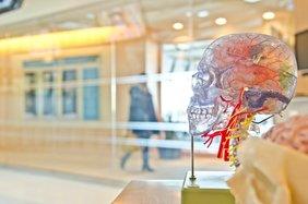 Dresden International University: Multiple Sklerose Management studieren